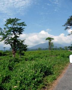 reaching-dhupjhora-elephant-camp