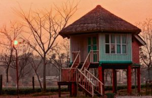 Staying option at Gorumara National Park: Gachbari or Dhupjhora Elephant Camp