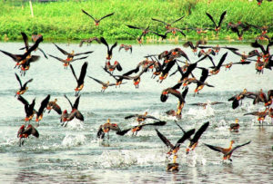 birds-spotted-in-rasikbil-coochbehar-west-bengal
